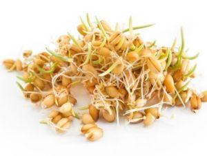 Germe de blé Prévention de la DMLA par les omega 3