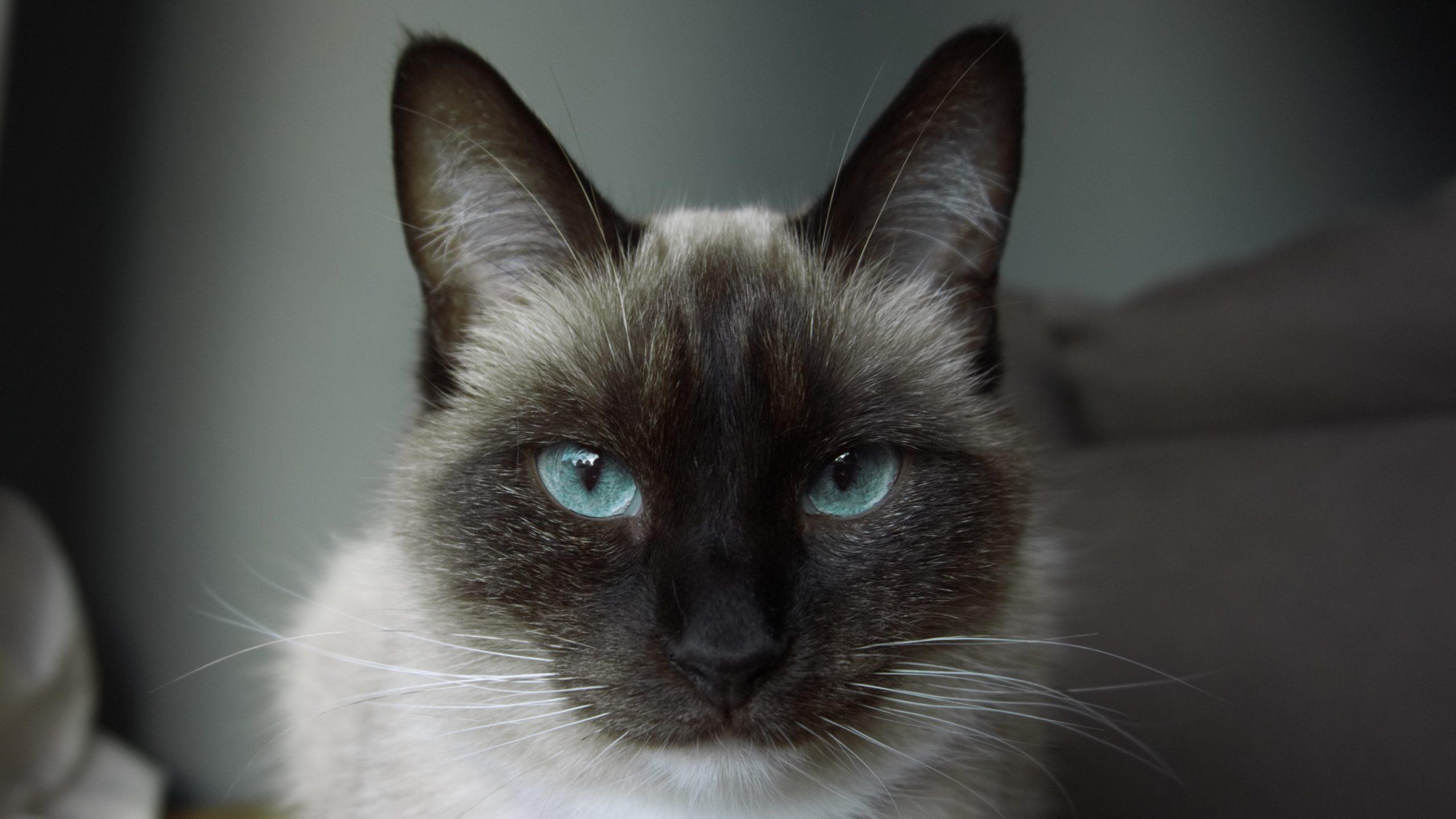 pourquoi la nuit tout les chat sont gris