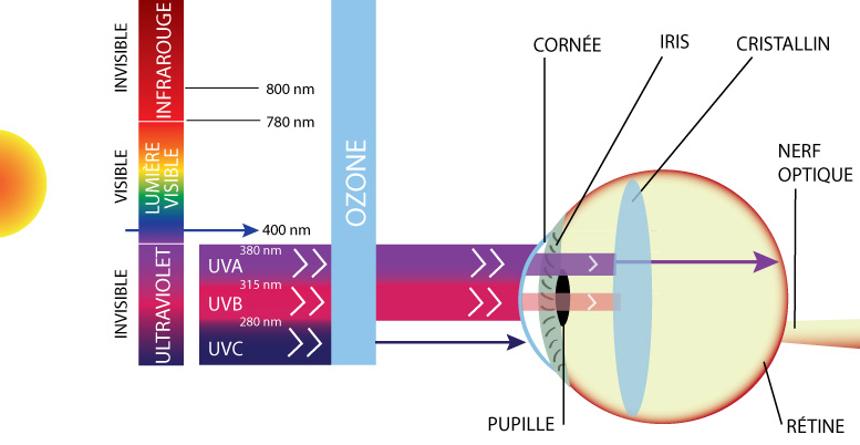 UV et Œil