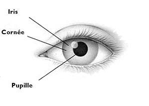 schéma iris pupille pour Yoga des Yeux